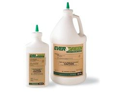 Certified Organic Evergreen Pyrethrum Bed Bug Powder (residual)