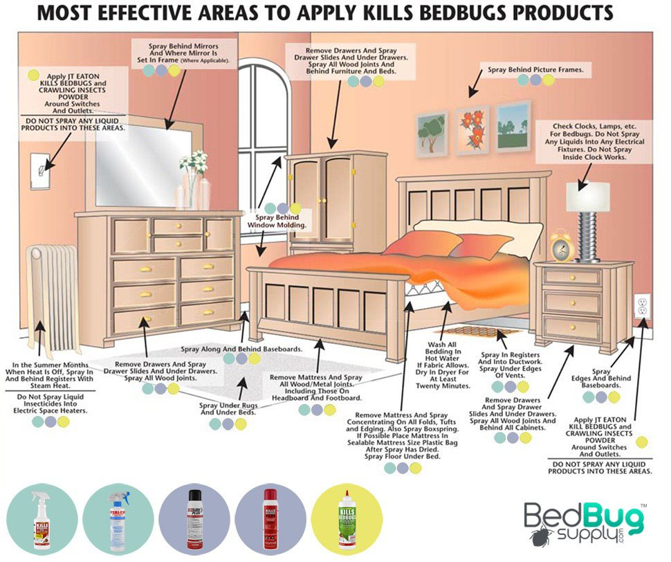 How to get rid of bed bugs extended additional info approximate timeline jeuxipadfo Gallery